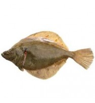 PLAICE WHOLE