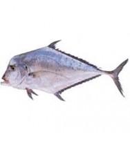 TALAKITOK FISH