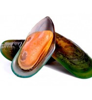 Green Mussel Half Shell